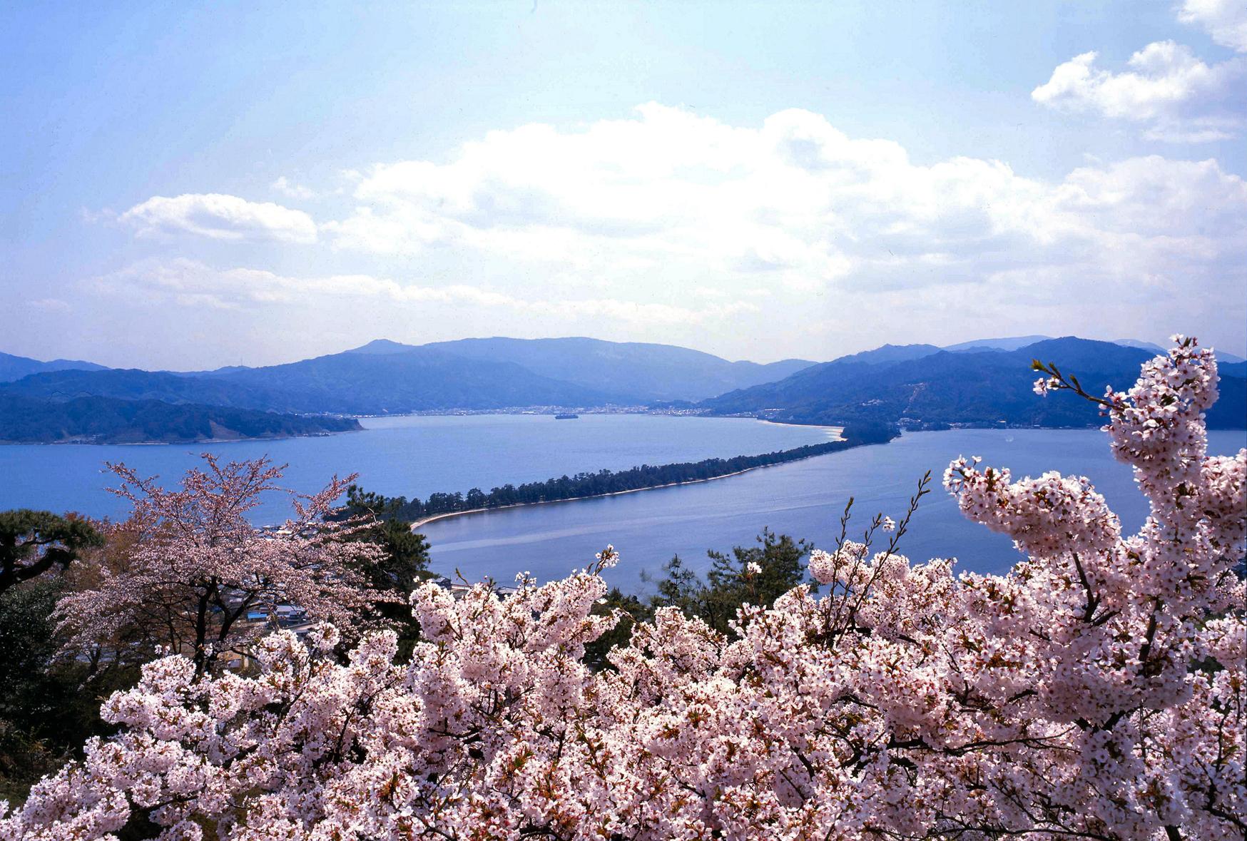 昇龍観 桜